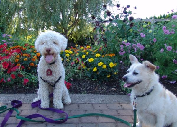 Dogs visiting the Oregon Garden