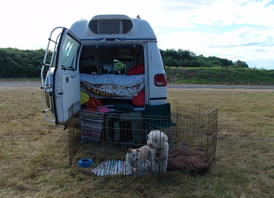 The dogs traveling