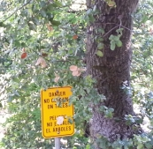 No climbing in tn the tree... hope the squirrels can read.