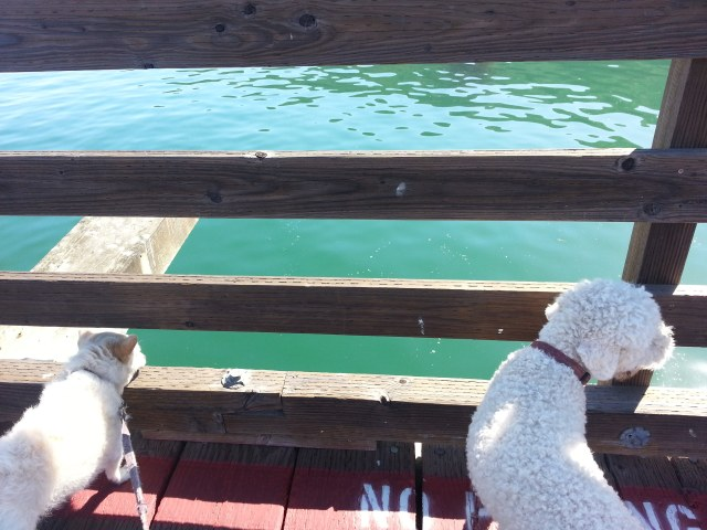 The Avila Beach Pier... looking out.