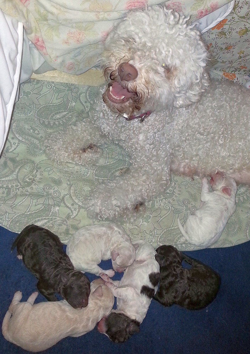 Olympia and the Pups, 3 1/2 days old