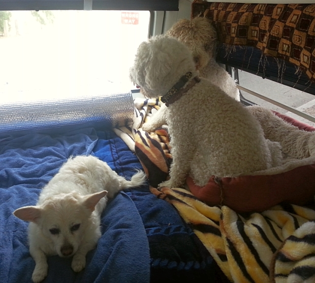 Pups in the RV