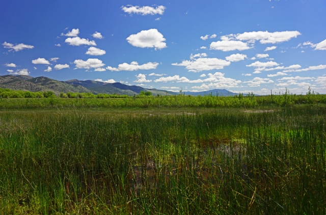 Goose Lake wetlands