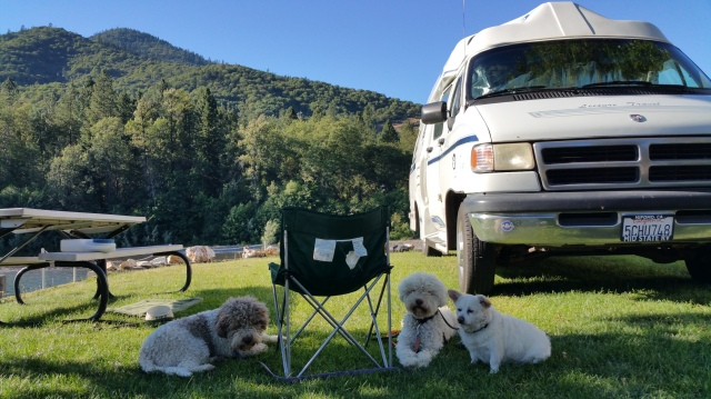 Camped at the Rogue River: Leashes on but not attached to anything!
