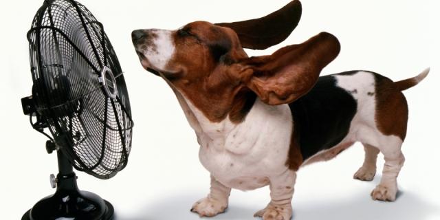 fan-dog